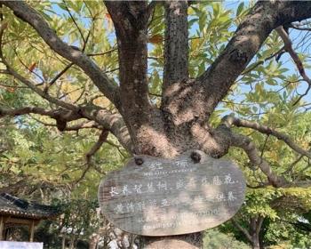 普陀山旅游还愿祈福圣地,给每段旅程增添福气
