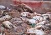 舟山近期部分新鲜渔货价格最高上涨20%