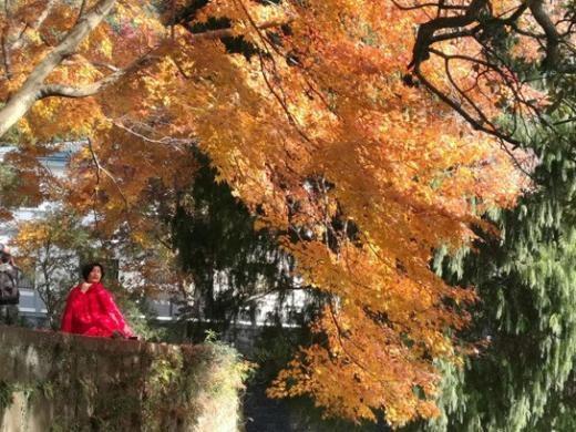 舟山旅游海山公园赏枫叶
