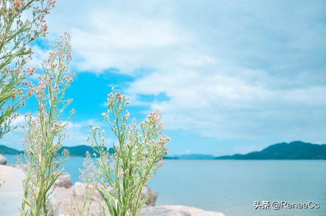 舟山旅游攻略开启衢山岛的十二时辰