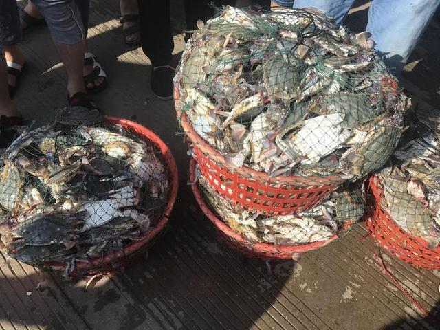 禁渔期结束第一网梭子蟹舟山水产码头人比螃蟹多