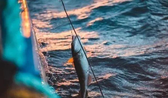 舟山海钓钓鱼公开赛在普陀六横启动