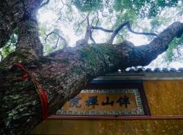 舟山普陀山旅游烧香求佛,普陀山也是一种生活